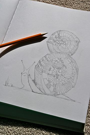 snail_sketch_det